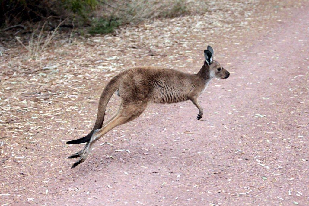 Australia1235_IkaraFlindersRangesNationalPark_WilpenaPound_WangaraLookoutHike