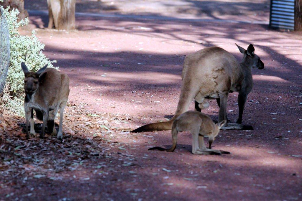 Australia1366_IkaraFlindersRangesNationalPark_WilpenaPound_WilpenaPoundCampground_Picchinini