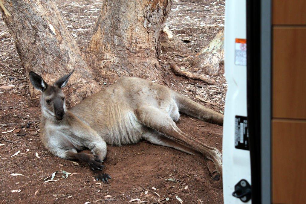Australia1426_IkaraFlindersRangesNationalPark_WilpenaPound_WilpenaPoundCampground_Picchinini