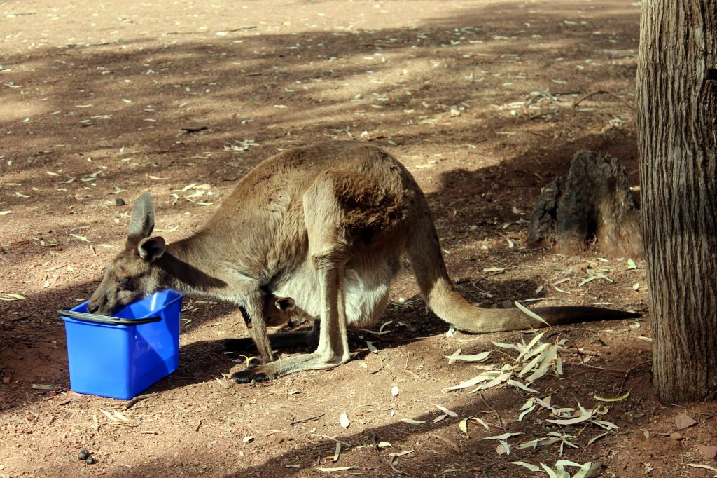 Australia1451_IkaraFlindersRangesNationalPark_WilpenaPound_WilpenaPoundCampground_Picchinini