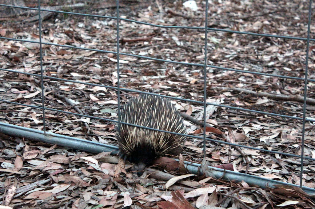 Australia1587_KangorooIsland_WesternKICaravanPark