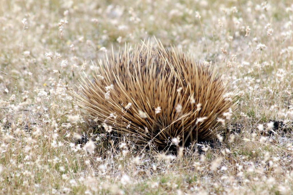 Australia1770_KangorooIsland_HansonBayWildlifeSanctuary