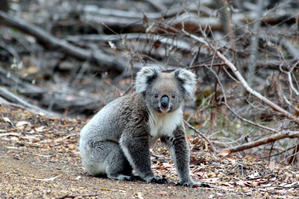 Australia1801_KangorooIsland_SCoastRd