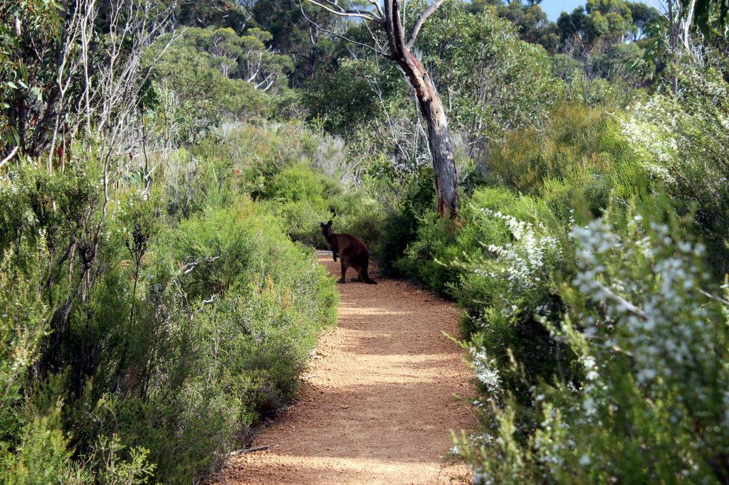 Australia1978_KangorooIsland_FlindersChaseNationalPark_PlatypusWaterholesWalk