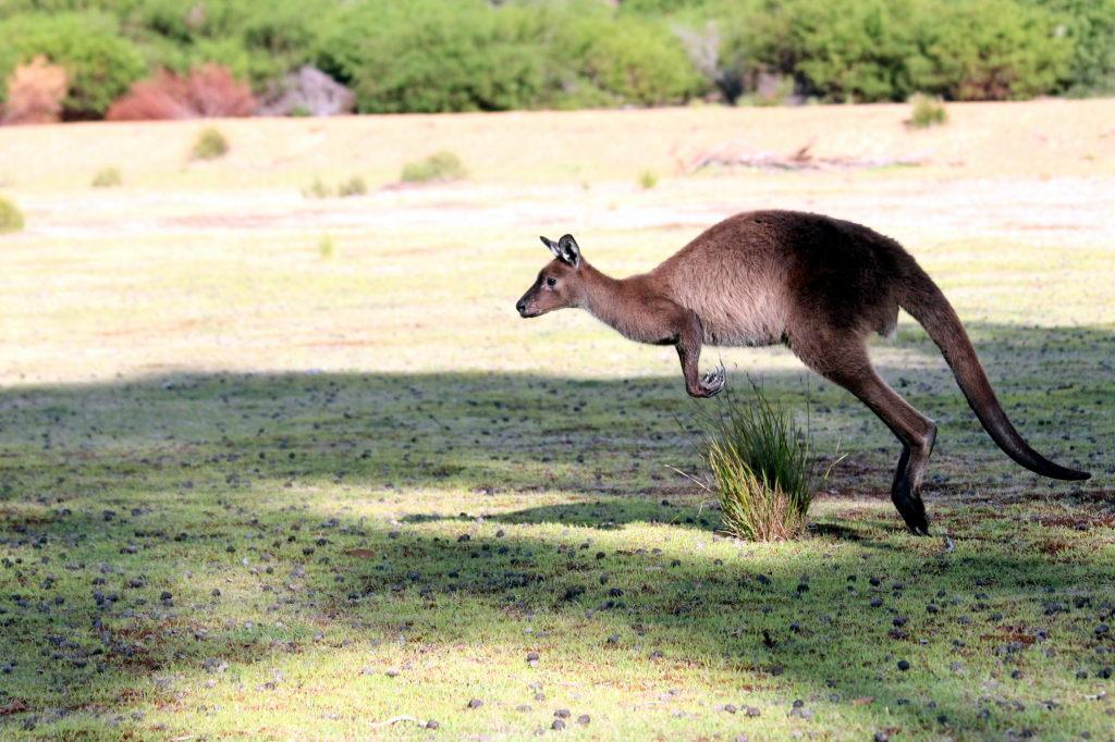 Australia2026_KangorooIsland_FlindersChaseNationalPark_HeritageWalk