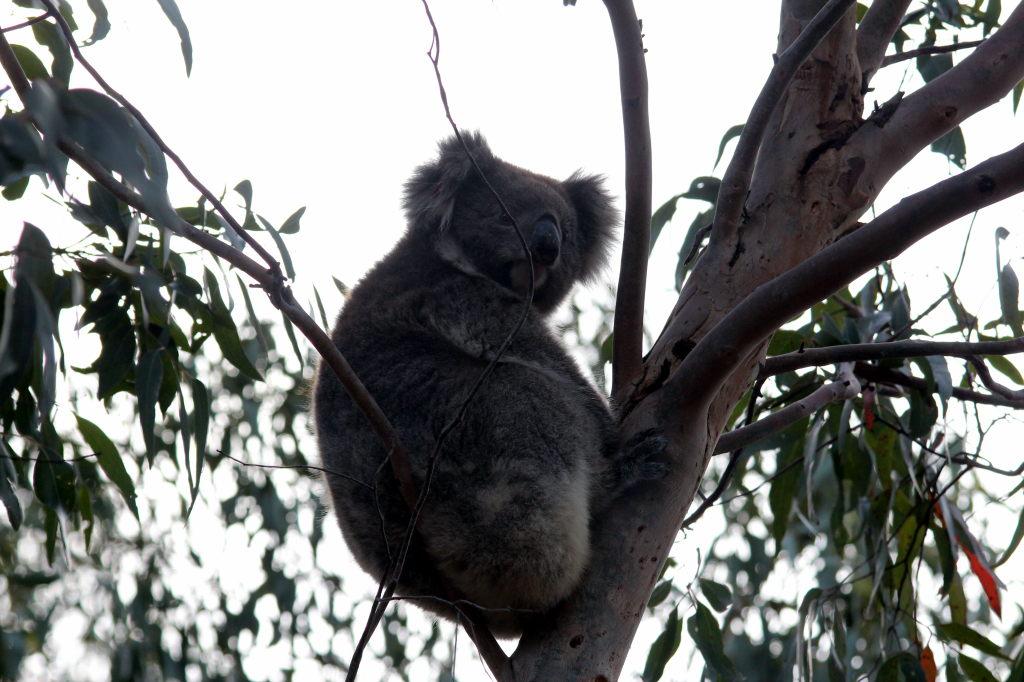 Australia2049_KangorooIsland_FlindersChaseNationalPark_HeritageWalk