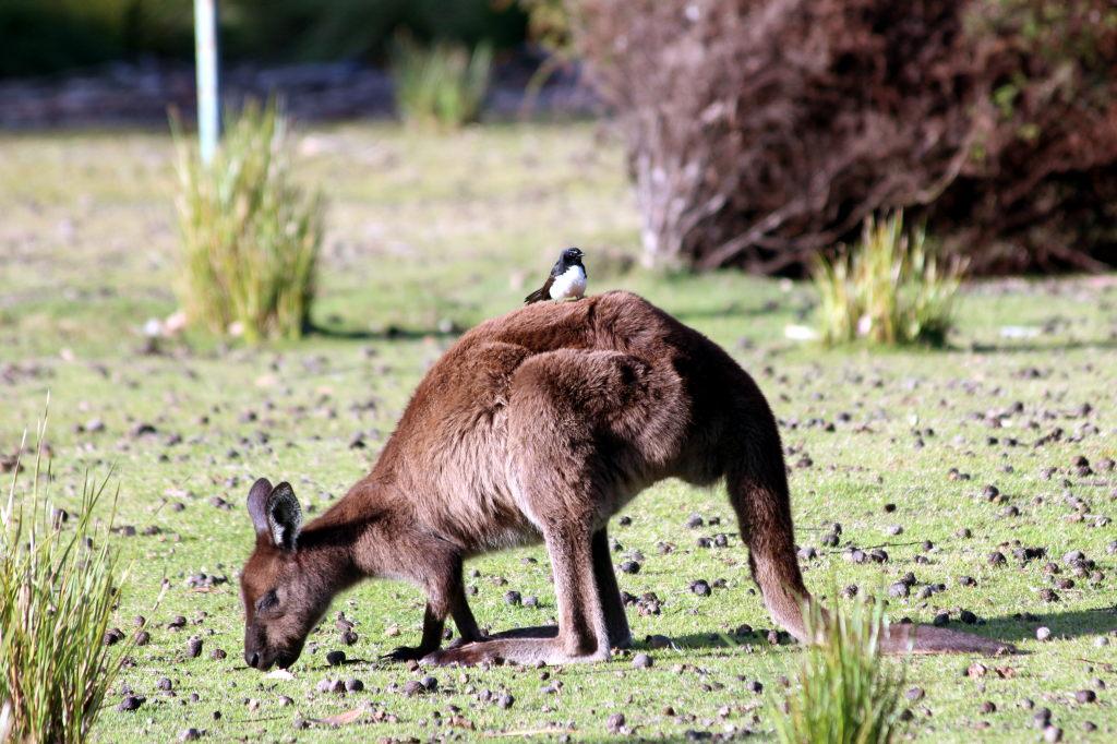 Australia2056_KangorooIsland_FlindersChaseNationalPark_HeritageWalk
