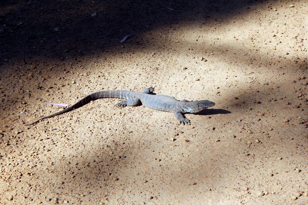 Australia2095_KangorooIsland_FlindersChaseNationalPark_SnakeLagoonRd