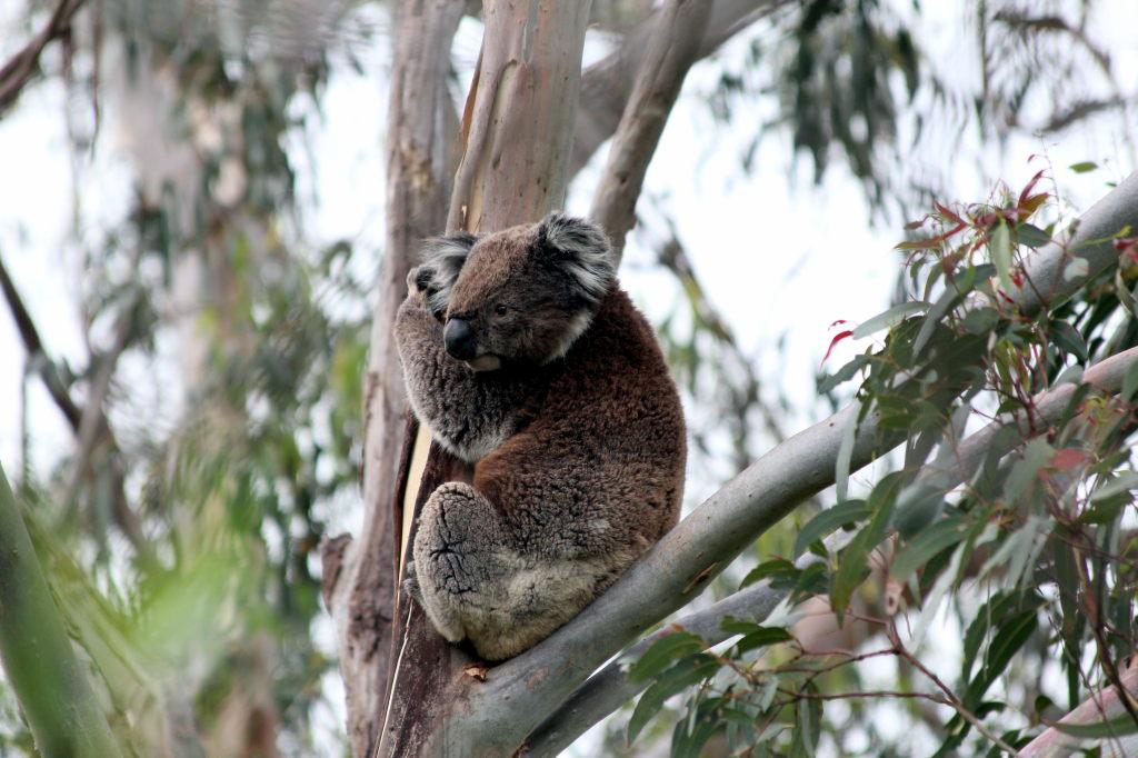 Australia3214_GreatOceanRoad_TowerHill