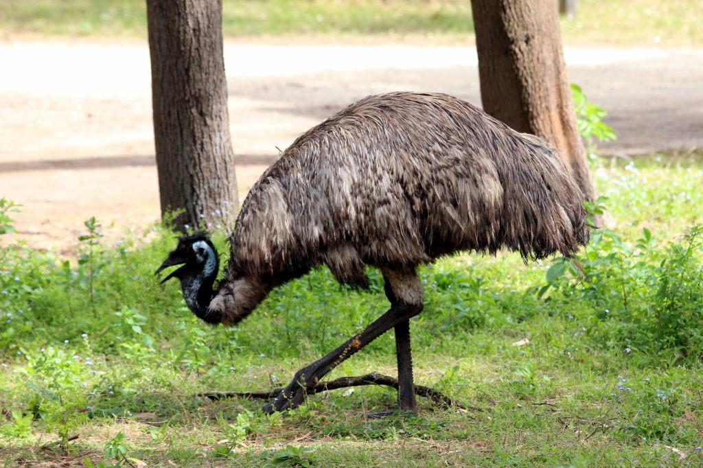 Australia3224_GreatOceanRoad_TowerHill