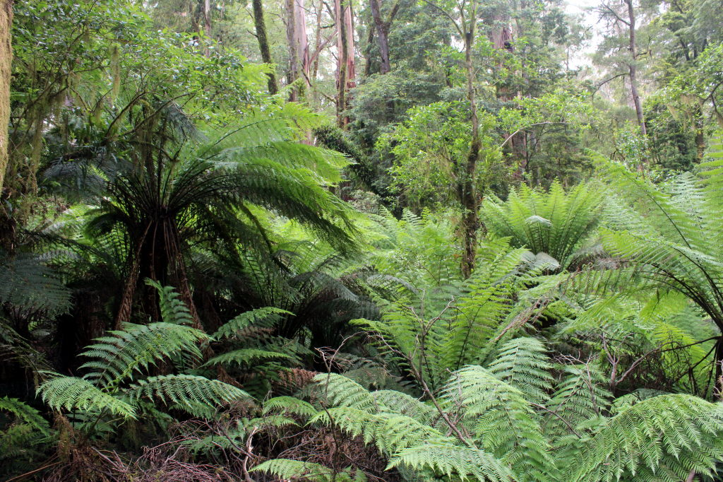 Australia3626_GreatOceanRoad_TripleFalls