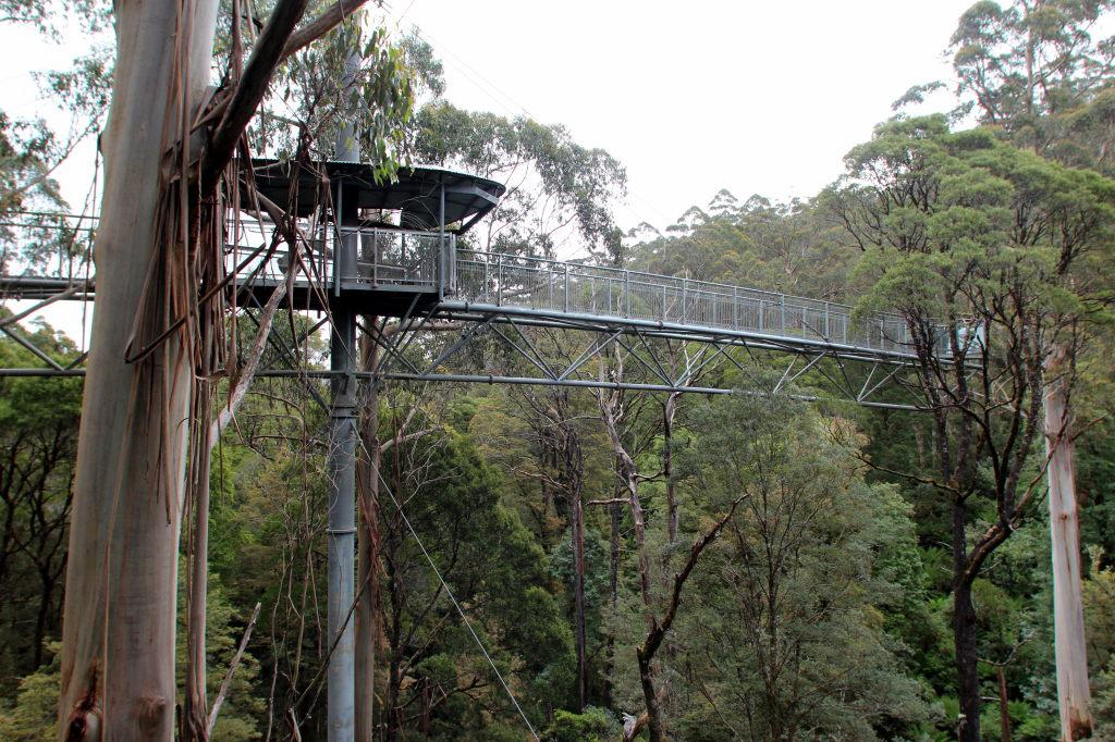 Australia3735_GreatOceanRoad_OtwayFlyTreetopAdventures