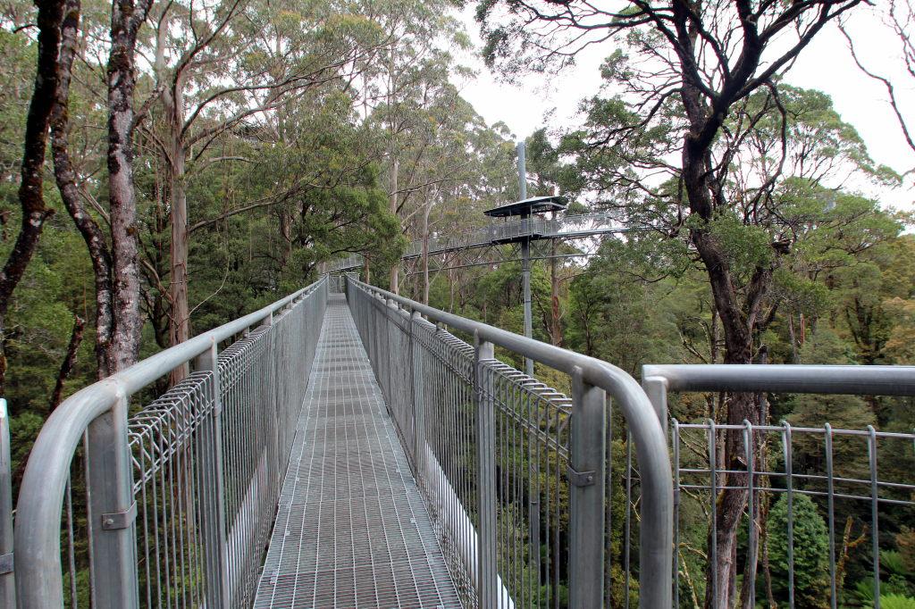 Australia3745_GreatOceanRoad_OtwayFlyTreetopAdventures