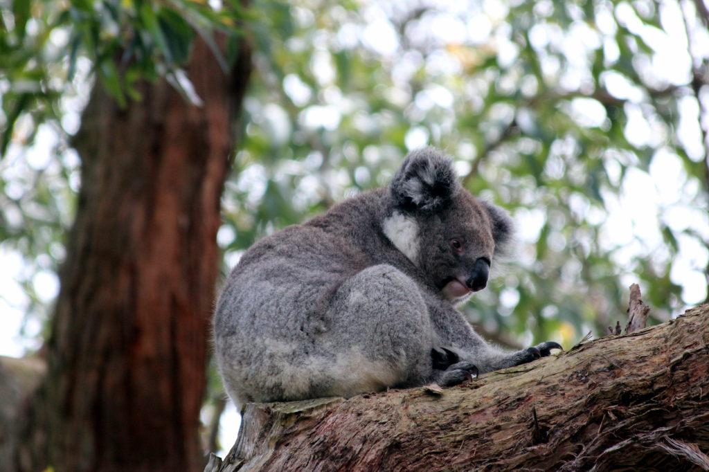 Australia3910_GreatOceanRoad_CapeOtway_LighthouseRd