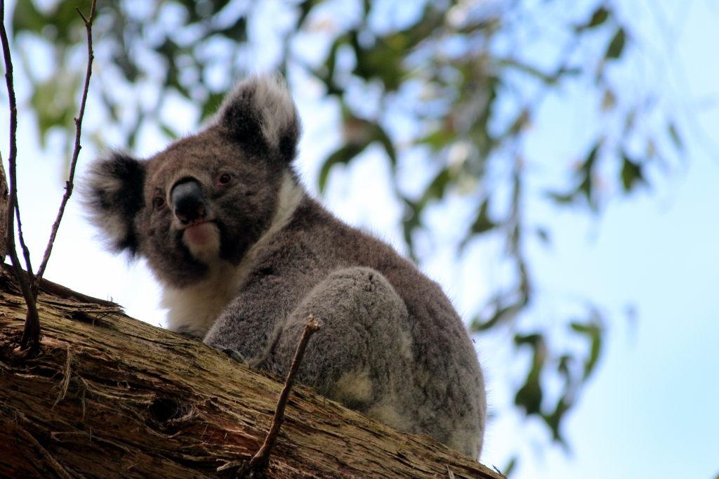 Australia3915_GreatOceanRoad_CapeOtway_LighthouseRd