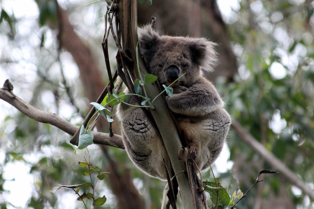 Australia3922_GreatOceanRoad_CapeOtway_LighthouseRd
