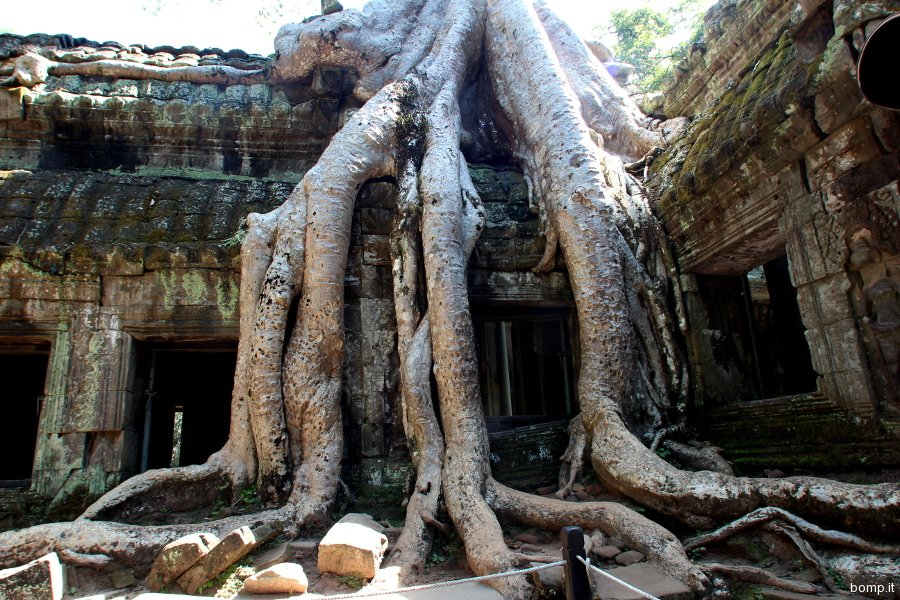 cambogia0897_taprohm