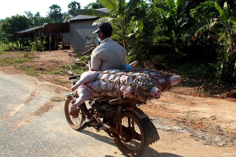 cambogia2062_kep