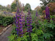 Islanda_20190909_122227_Akureyri_botanicGarden