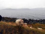 Islanda_20190911_114314_v1