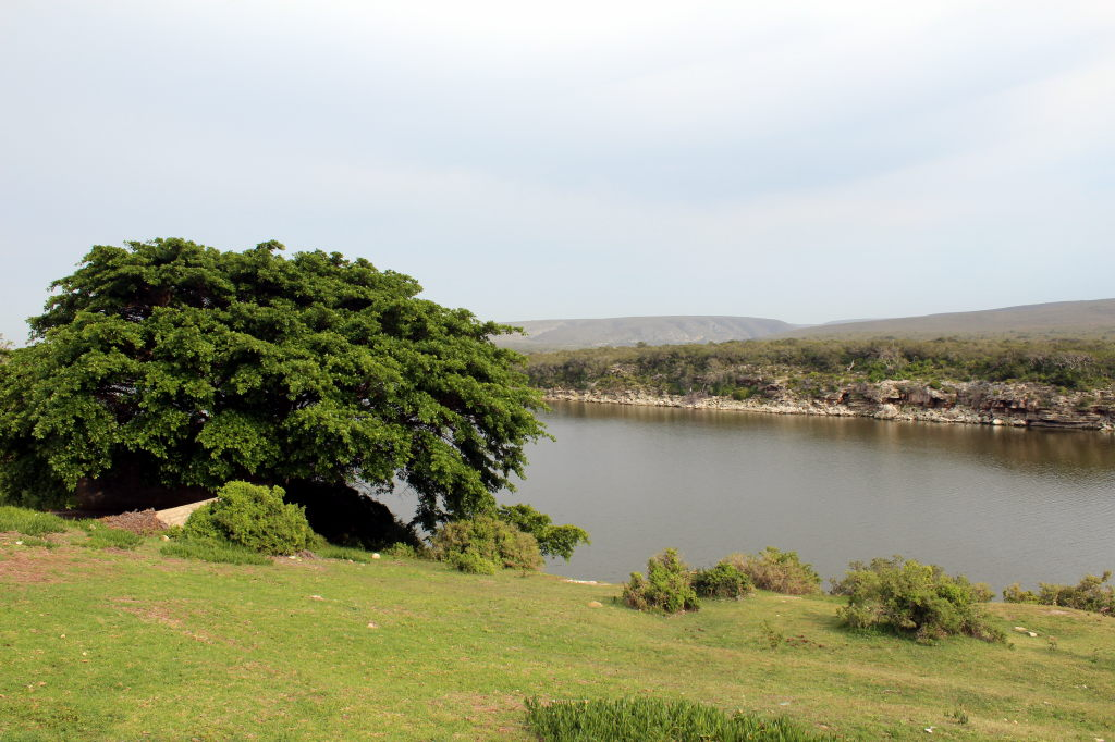 Sudafrica_1048_ZA_DeHoopNatureReserve_DeHoopCollection_TheFigTree