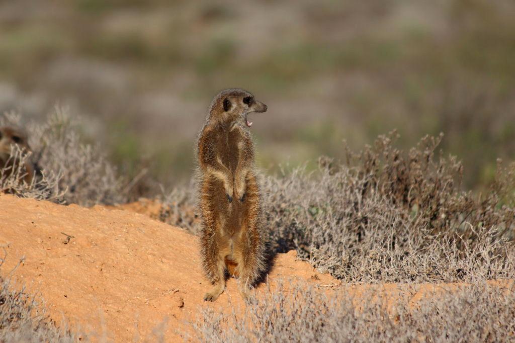 Sudafrica_1167_ZA_Oudtshoorn