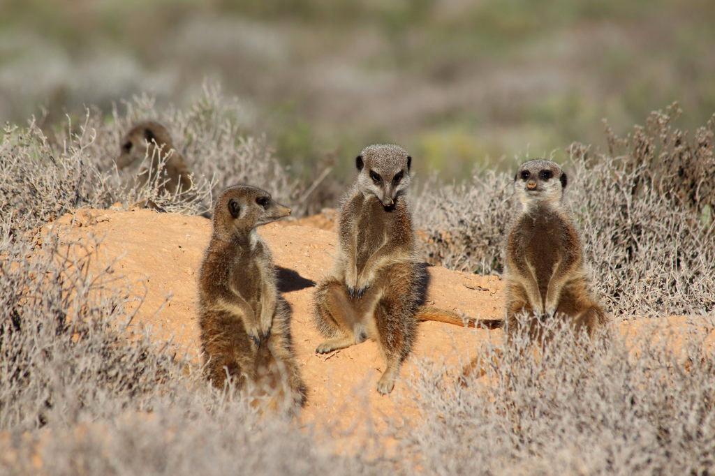 Sudafrica_1195_ZA_Oudtshoorn