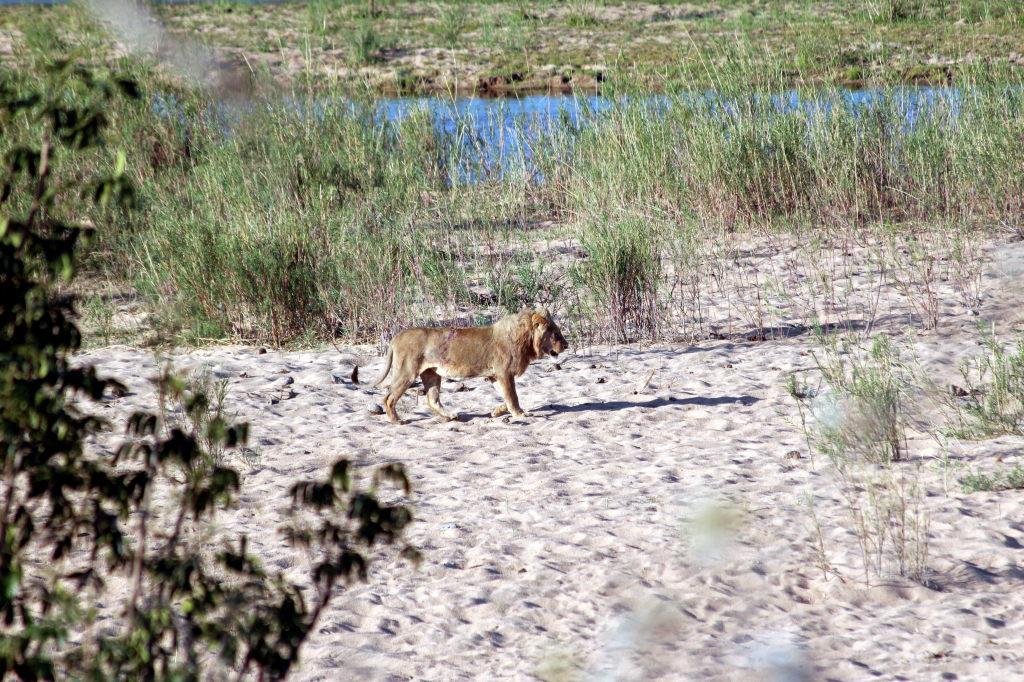Sudafrica_2319_ZA_KrugerNationalPark