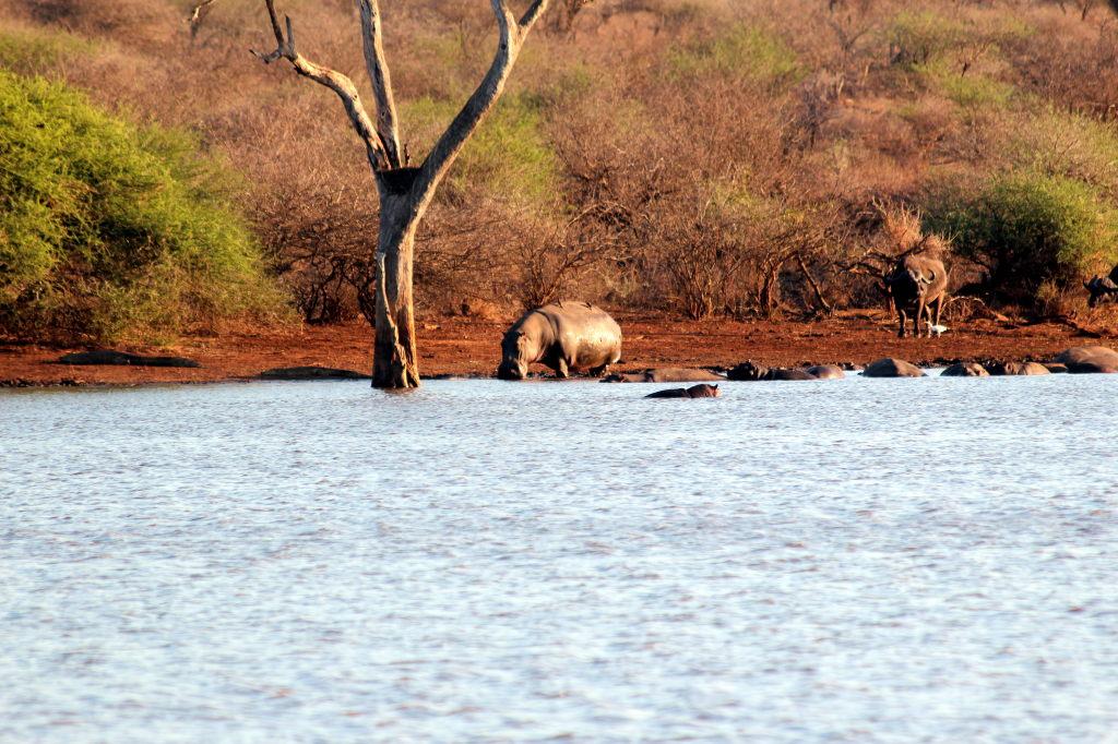 Sudafrica_2346_ZA_KrugerNationalPark