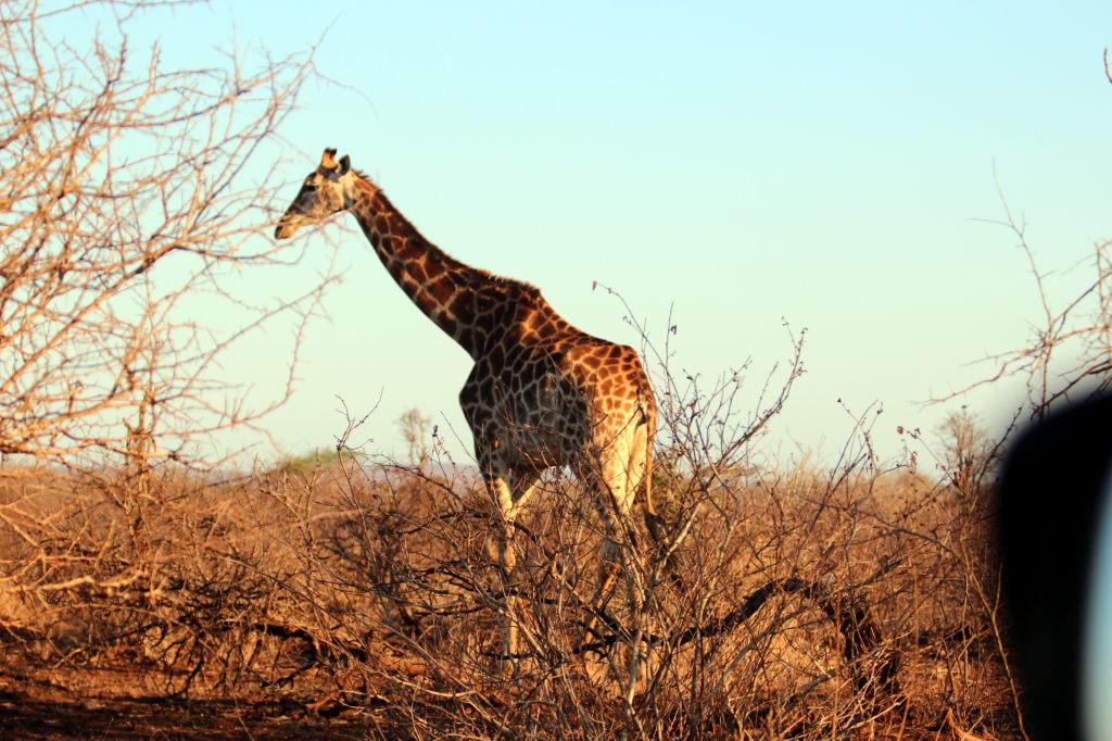 Sudafrica_2352_ZA_KrugerNationalPark