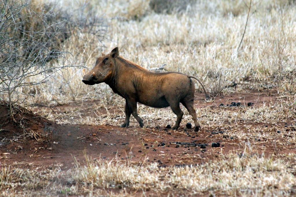 Sudafrica_2450_ZA_KrugerNationalPark_SunriseGameDrive