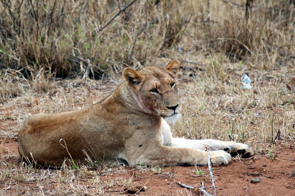 Sudafrica_2532_ZA_KrugerNationalPark_SunriseGameDrive