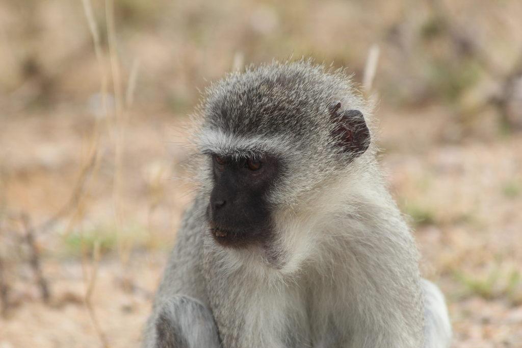 Sudafrica_2861_ZA_KrugerNationalPark