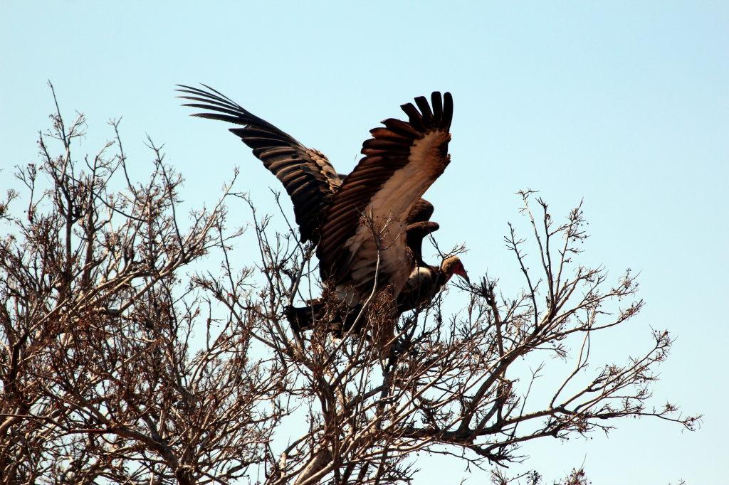 Sudafrica_2926_ZA_KrugerNationalPark