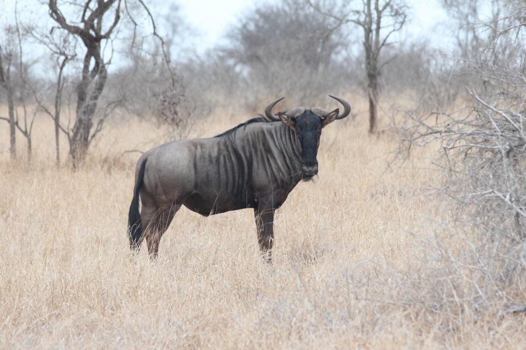 Sudafrica_2966_ZA_KrugerNationalPark