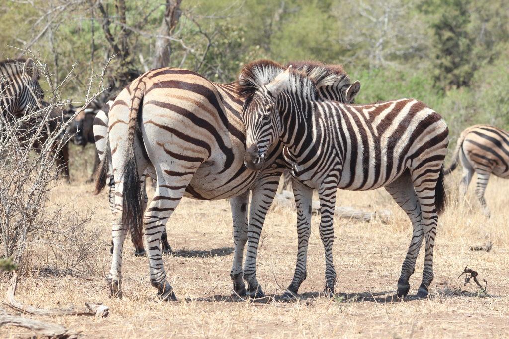Sudafrica_3063_ZA_KrugerNationalPark