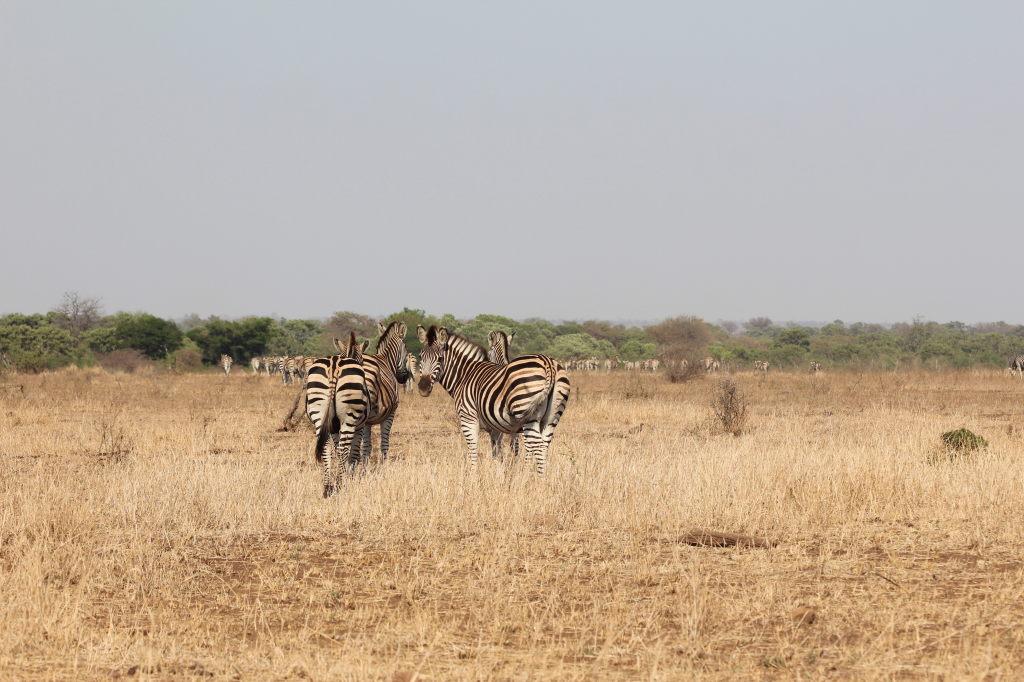 Sudafrica_3195_ZA_KrugerNationalPark