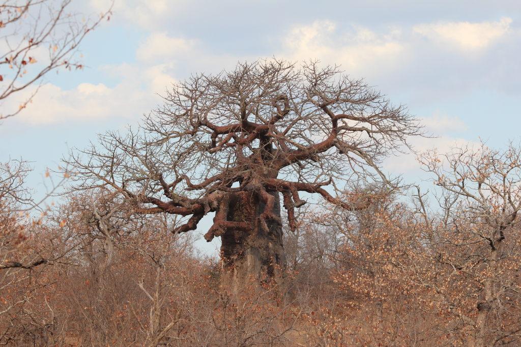 Sudafrica_3291_ZA_KrugerNationalPark