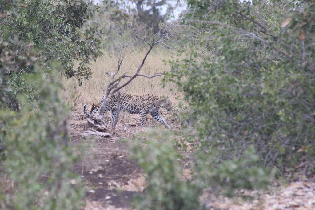 Sudafrica_3483_ZA_KrugerNationalPark