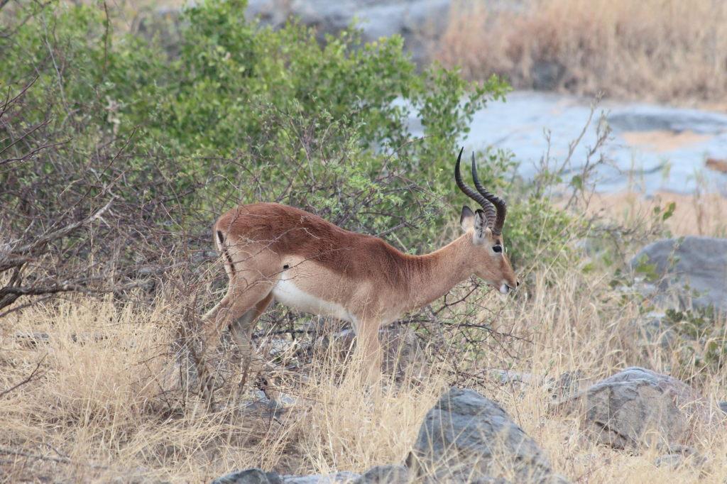 Sudafrica_3649_ZA_KrugerNationalPark
