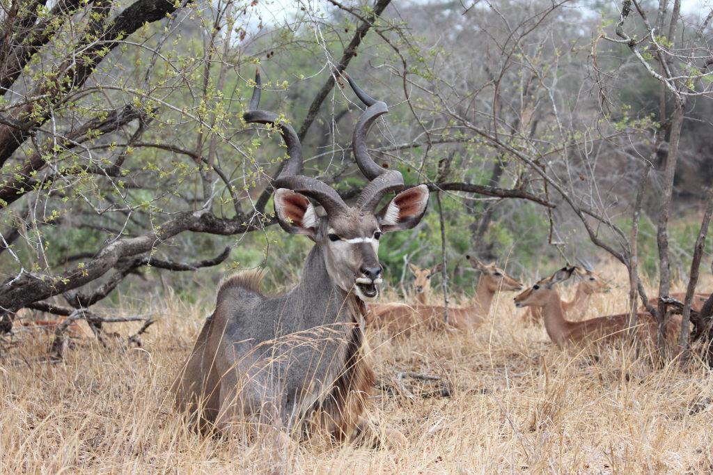 Sudafrica_3655_ZA_KrugerNationalPark