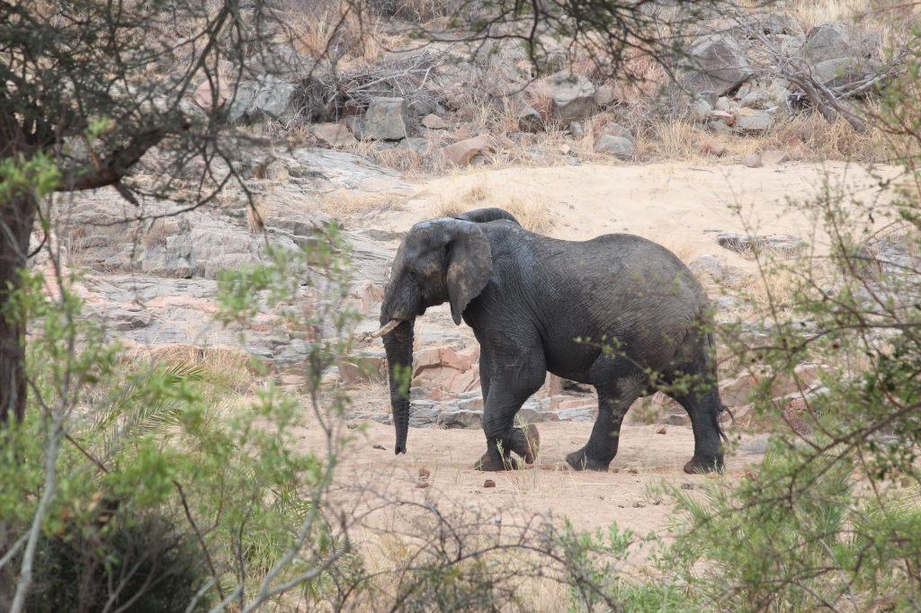 Sudafrica_3673_ZA_KrugerNationalPark