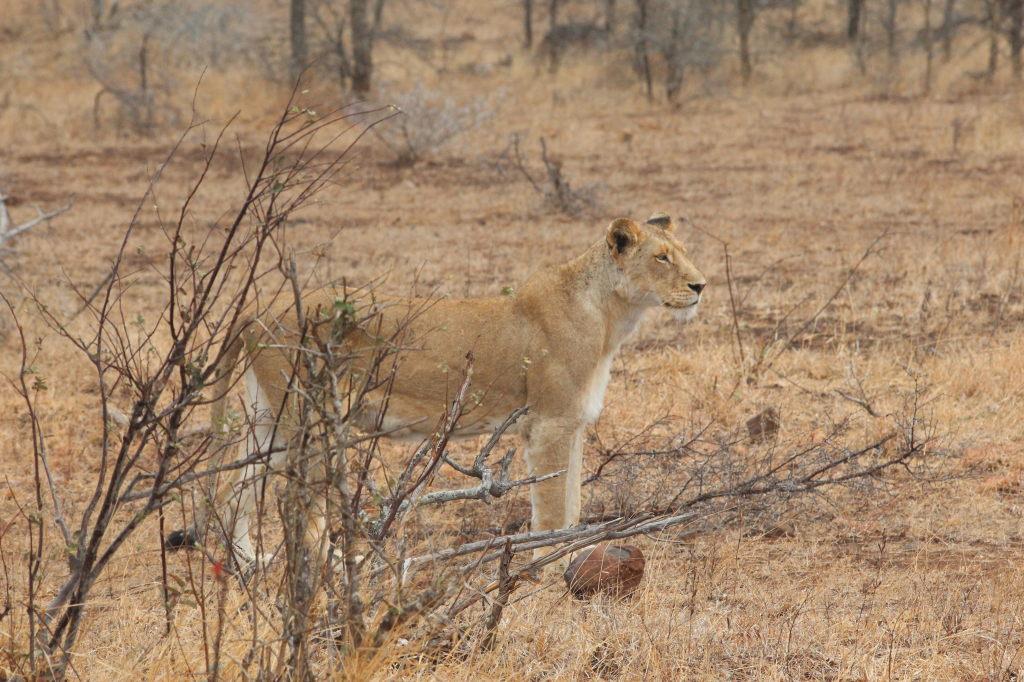 Sudafrica_3727_ZA_KrugerNationalPark