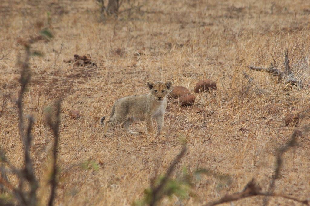 Sudafrica_3728_ZA_KrugerNationalPark