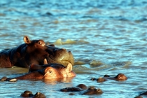 Sudafrica_1875_ZA_iSimangaliso_StLucia_Hippo&CrocBoatCruise