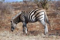 Sudafrica_2278_ZA_KrugerNationalPark