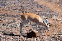 Sudafrica_2285_ZA_KrugerNationalPark
