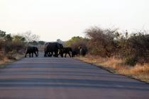 Sudafrica_2358_ZA_KrugerNationalPark