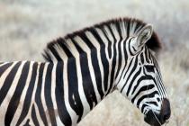 Sudafrica_2420_ZA_KrugerNationalPark_SunriseGameDrive