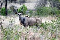 Sudafrica_2443_ZA_KrugerNationalPark_SunriseGameDrive